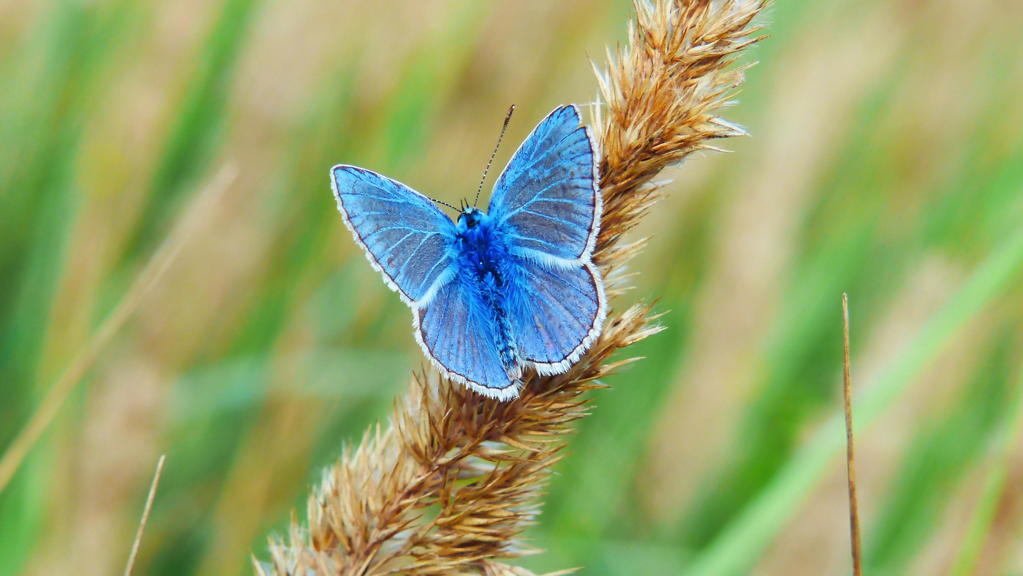 butterfly - krzysztof-niewolny-773352-unsplash